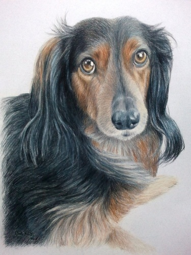 Pet Portraits Drawing